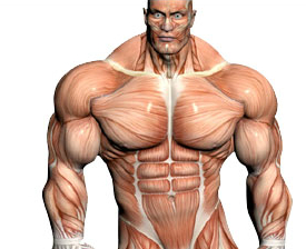 muscle building steroid pills for sale
